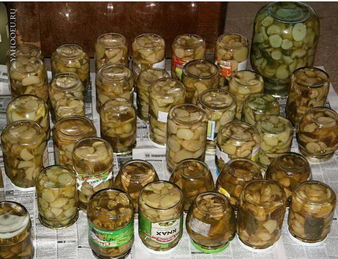 Соления грибов на зиму рецепты