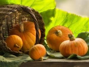 Польза и вред тыквы