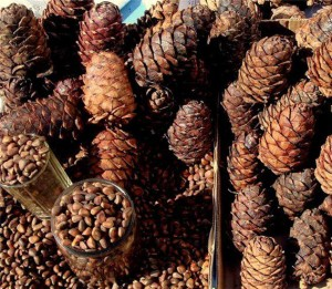 Чем полезны кедровые орехи