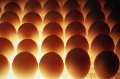 Почему нельзя есть много яиц